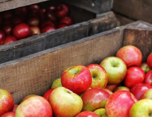 Upstate apple farms grapple with wet weather, labor shortage and COVID-19